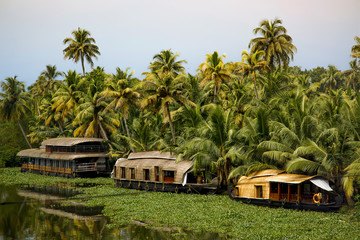 Scenic view of houseboat on vembanadu lake against palm trees