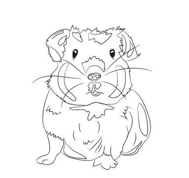 Guinea Pig Art Photos Royalty Free Images Graphics Vectors Videos Adobe Stock
