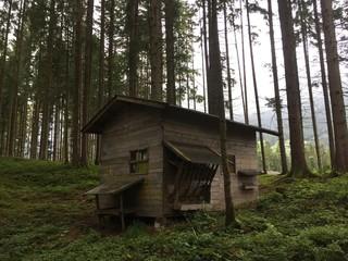 Hütte im Wald Wall mural