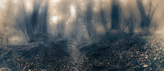 Туман в лесу. Таинственный туманный лес со сказочным видом