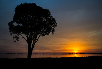 Silhouette of tree on the lake at sunset