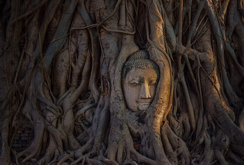 Buddha's head in tree roots at temple Ayutthaya as a world heritage site.