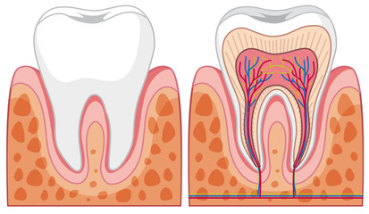 Set of tooth diagrams