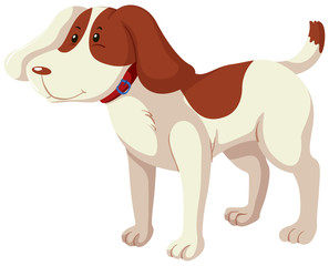 A brown and white spot dog