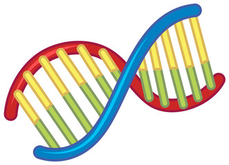 DNA on White Background