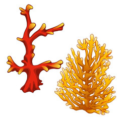 Set of red and orange corals isolated on a white background. Vector illustration.