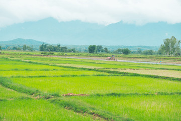 Garden Poster Rice fields Rice field , Farmer and Tractor with Mountain background in thailand