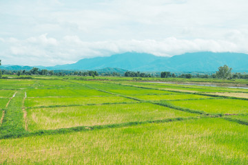 Papiers peints Vert chaux Rice field with Mountain background in thailand