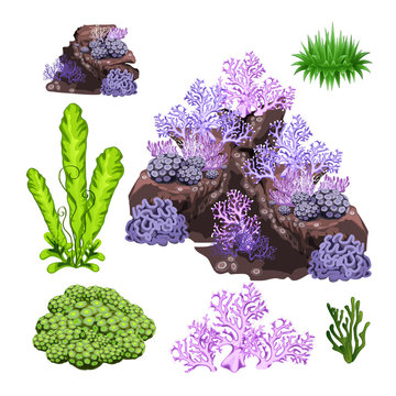 The set of algae, corals and underwater rocks isolated on white background. Vector cartoon close-up illustration.