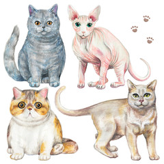 Set with four different breeds of cats isolated on white background. Watercolor pencils hand drawn illustration