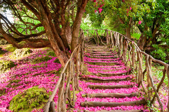 The staircase taken along the path is covered by the pink and purple petals fallen from the laurel in bloom