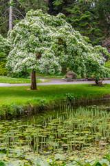 Trees, walk way and lake in Botanic Garden