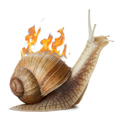 Burning snail isolated on white