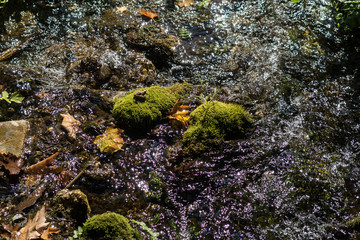 Mossy stones and leaves in a small creek