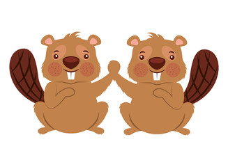 cute couple beaver animal rodent