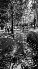 parque japones