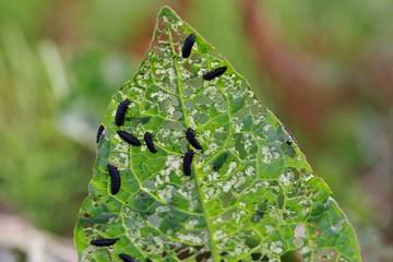 植物を食い尽くす虫