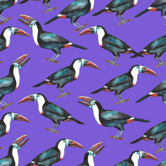 Seamless pattern of tropical  toukans