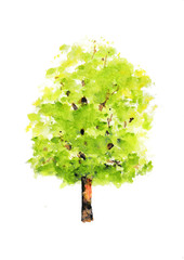 Green tree on white background, watercolor illustrator, hand painted