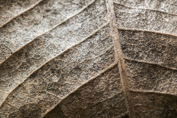 Detail of a Dry leaf texture Abstract background
