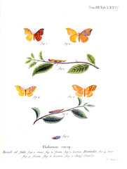 Illustration of butterflies