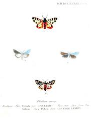 Illustration of butterflies