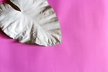 Pink background leaves