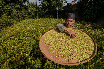 A worker spreads a batch of cloves on a bamboo plate to dry at Rancamaya village in Bogor
