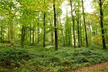 Lyons la Foret, France - november 1 2017 : forest