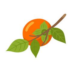 Persimmon branch fruit