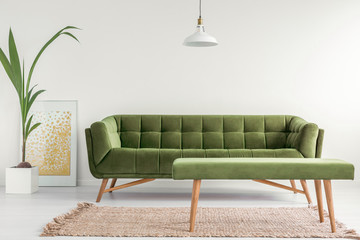 Olive green, stylish settee and an upholstered bench in a bright living room interior with white walls and a plant. Real photo.