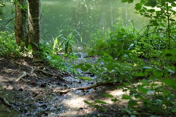 stream near the lake