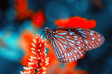 Self adhesive Wall Murals Butterfly Closeup beautiful butterfly & flower in the garden.
