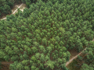 The road in the pine forest - view from the drone
