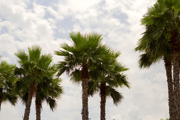 palm trees against blue cloudy sky