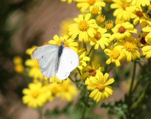 Photo on textile frame Flower shop Gele bloemen en witte vlinder