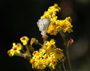 Wall Murals Flower shop Gele bloemen en witte vlinder