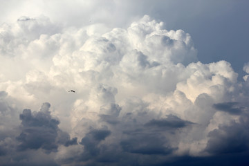 Bird soaring among stormy clouds. Dramatic stormy clouds before rain. Weather background.