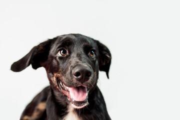 Cute Black Puppy on isolated Backbround