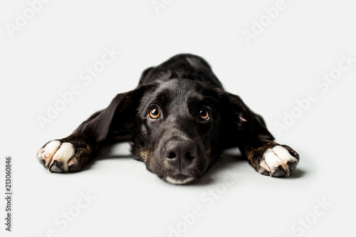 Sad Puppy With Puppy Dog Eyes Stock Photo And Royalty Free Images