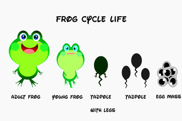 Frog life cycle,cartoon style,Animals life vector.
