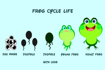 Frog life cycle,cartoon style,Animals life vector.