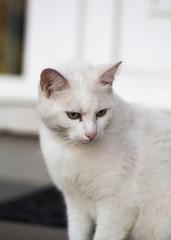 portrait of european type cats living in belgium
