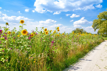 Feld mit bunten Blumen in der Nähe von Oberbohingen, Nürtingen