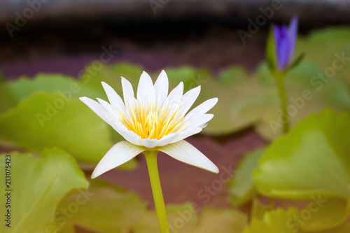 Lotus flower photo 4k pictures 4k pictures full hq wallpaper lotus flower facts the lotus flower grower direct fresh cut flowers lotus flower facts lotus flowers facts growing flower museum lotus flowers gallery mightylinksfo