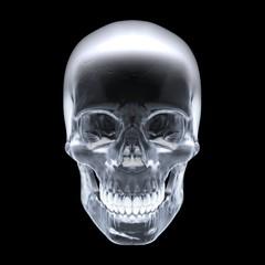 Human skull. 3d rendering