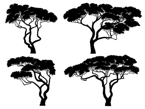 Set of silhouettes of African acacia trees.