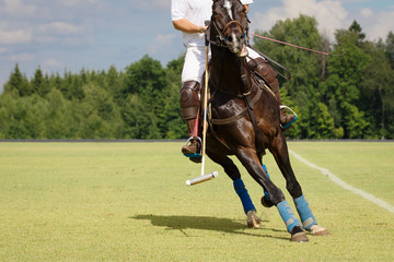 Horse Polo Player with mallet in the game action