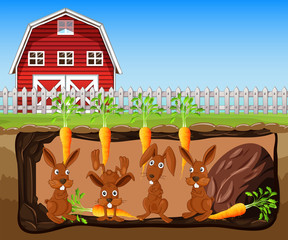 Rabbit Living Underground Farm