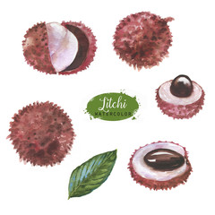 Hand drawn watercolor illustration set of isolated litchi fruits on the white background. Super food